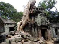 ta prohm, trees, angkor, siem reap, cambodia