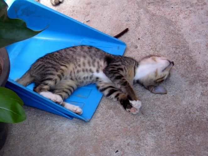 kitten, koh phi phi, island, thailand