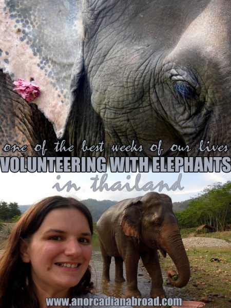My major bucket list item: Volunteering for a week at Elephant Nature Park, Chiang Mai, Thailand