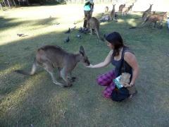 Kangaroo, Lone Pine Koala Sanctuary, Brisbane, Australia