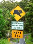 Koala road sign, Australia
