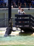 Australia Zoo crocodile show with Bindi Irwin