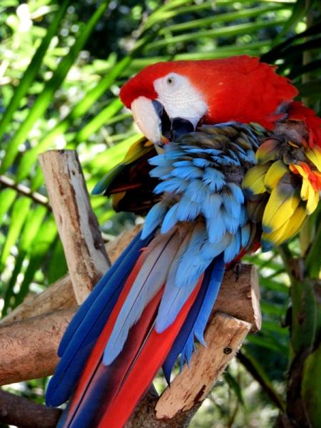 Australia Zoo macaw parrot