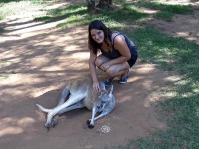 Australia Zoo kangaroo petting