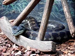 Australia Zoo snake