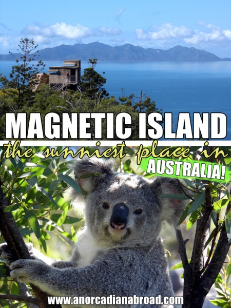 Magnetic Island - the sunniest place in Australia, and one of the best places to see wild koalas!