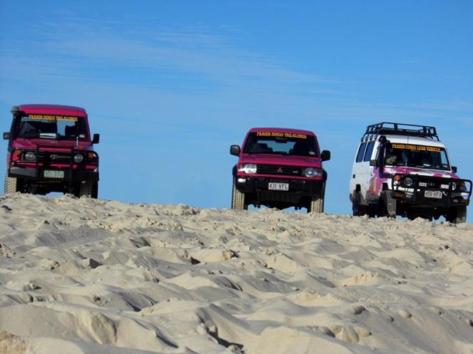 Fraser Island Dingo's tour, Australia