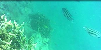 Whitsundays snorkelling, Australia