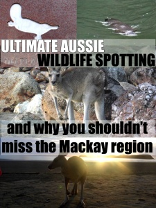 Australian Wildlife and Where To Find Them - Platypuses and Kangaroos in Mackay