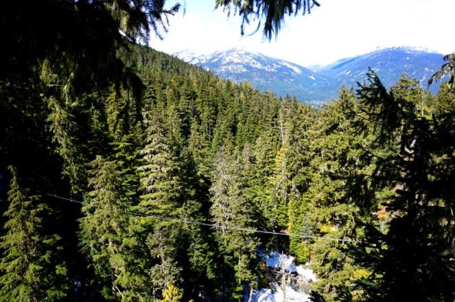 Ziplining view, Whistler, Canada