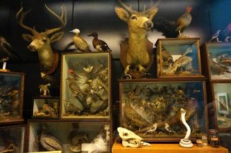 Beatty Biodiversity Museum, UBC, Vancouver, Canada