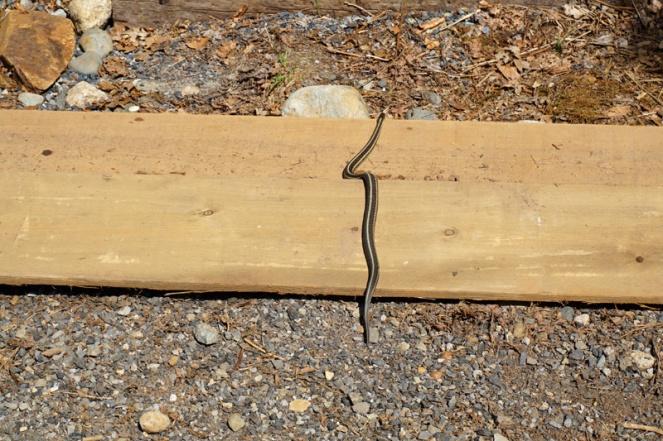 Snake, Squamish, BC, Canada