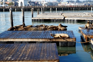 Pier 39, Fisherman's Wharf, San Francisco