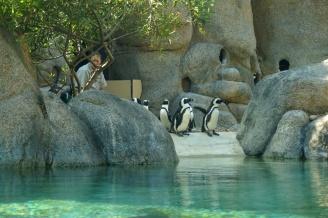 Penguins, San Diego Zoo, USA