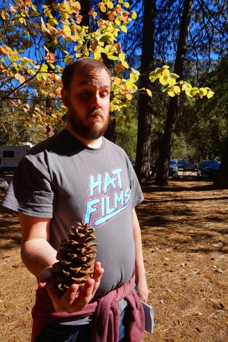 Giant pine cone, Yosemite National Park, California, USA