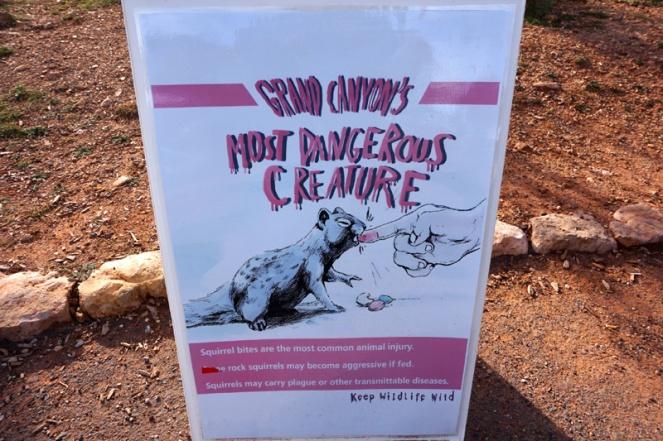 Squirrel wildlife warning, Grand Canyon, Arizona, USA