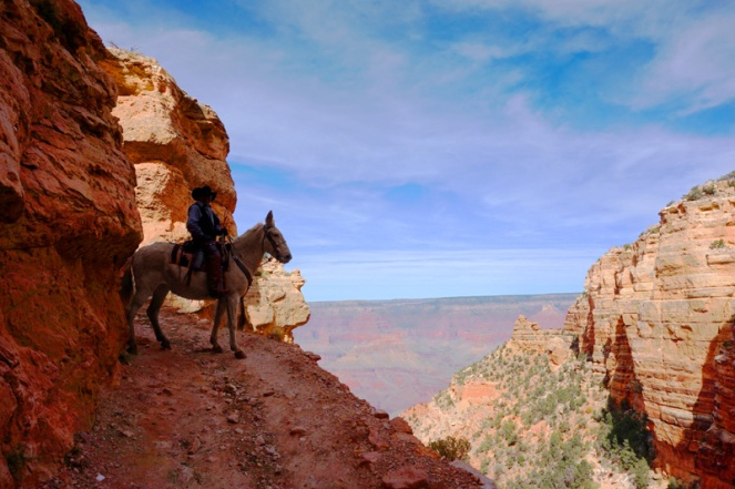 Mule, Grand Canyon, Arizona, USA