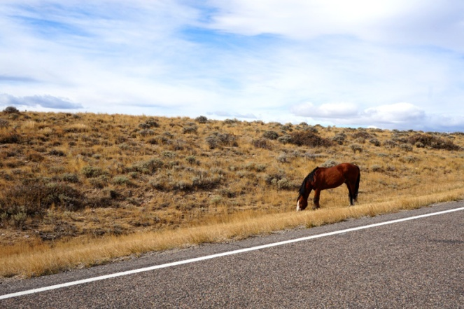 A wild horse, Wyoming, USA