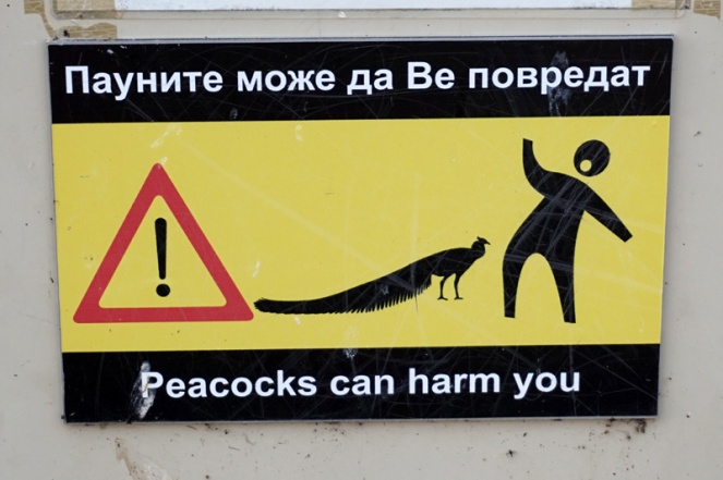 Peacock sign, St Naum Monastery, Lake Ohrid, North Macedonia