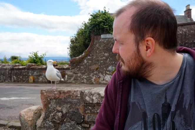 Seagull, Rosemarkie, Black Isle, Scotland