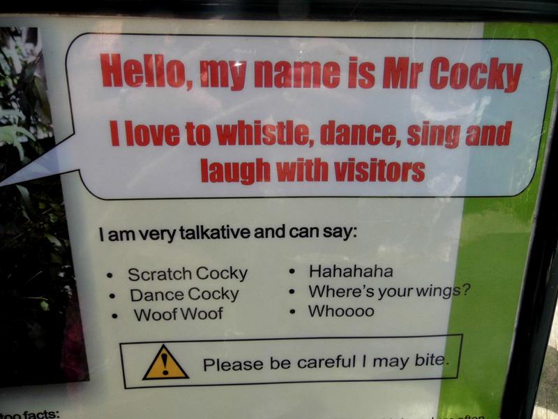 Mr Cocky, Lone Pine Koala Sanctuary, Brisbane, Australia