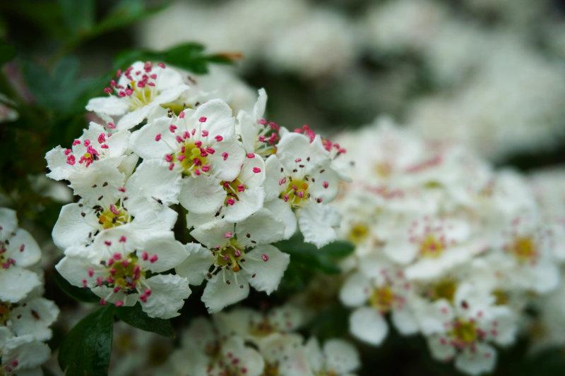 Flowers, Lake District, England